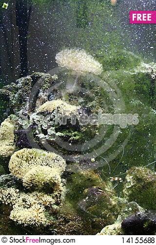 Free Shrimp Navigates Aquarium Bubbles Royalty Free Stock Photos - 14155688