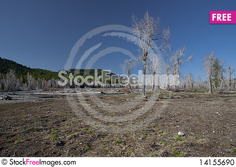 Free Trees Before Spring Stock Photo - 14155690