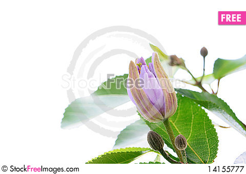 Free Blossoming Tree Royalty Free Stock Photography - 14155777
