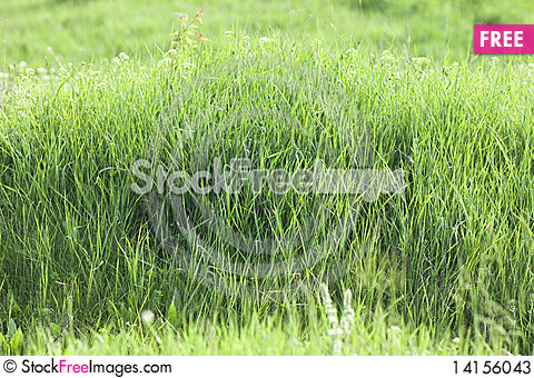 Free Fresh Green Grass Stock Photos - 14156043