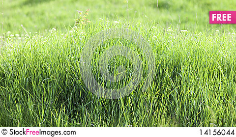 Free Fresh Green Grass Stock Images - 14156044
