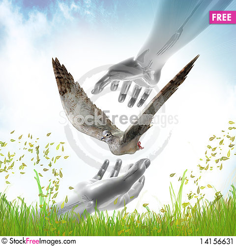 Free Hands Catching Dove For Peace Symbol Stock Image - 14156631