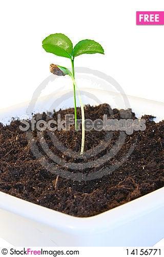 Free New Life Stock Image - 14156771
