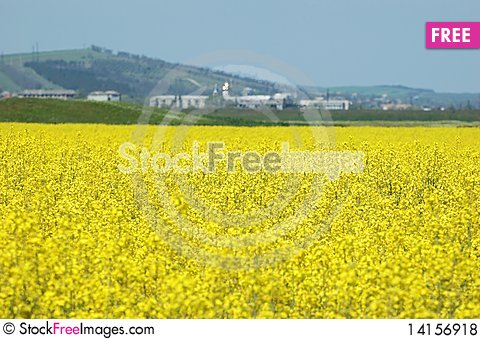Free Spring Rape Field - Fuel Material Royalty Free Stock Photos - 14156918