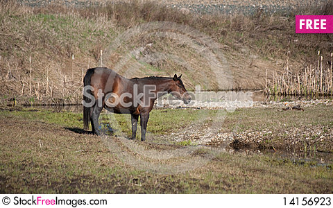 Free Mare By Creek Stock Photos - 14156923