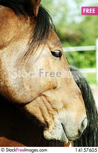 Free Horse5 Royalty Free Stock Photo - 14157605