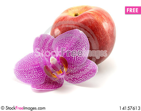 Free One  Orchid  With Red Apple Stock Photos - 14157613