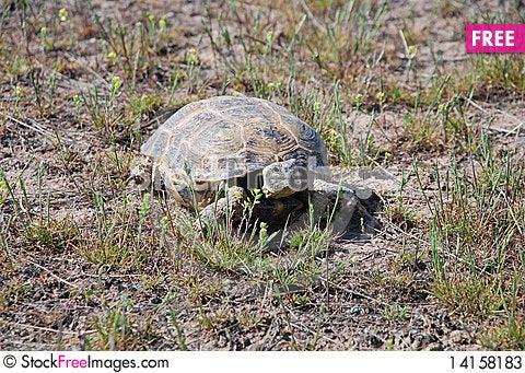 Free Tortoise Stock Photos - 14158183