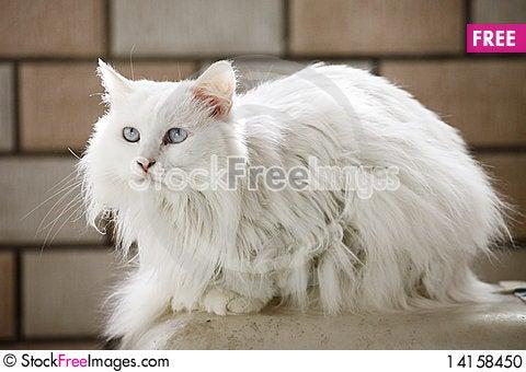 Free Cute Cat Indoor Stock Photo - 14158450