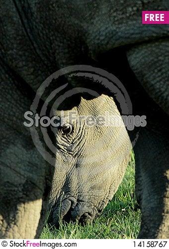 Free Rhino S Eye Royalty Free Stock Photography - 14158767