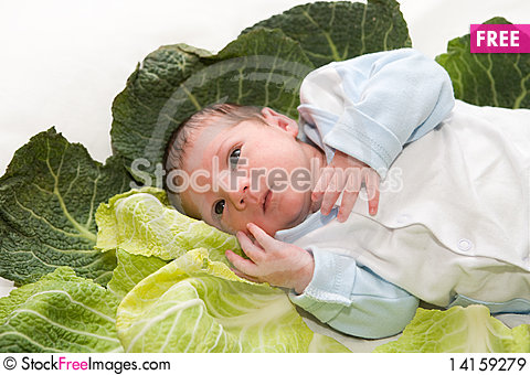Free Baby Newborn In Cabbage Leaves Royalty Free Stock Images - 14159279