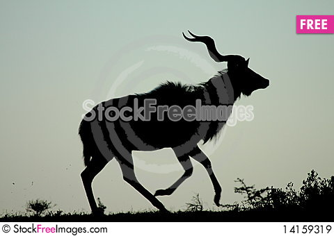Free Kudu Running Royalty Free Stock Images - 14159319