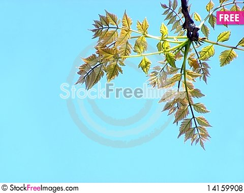 Free Branch With Leaves Royalty Free Stock Photos - 14159908