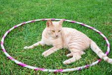 Free Tawny Cat Royalty Free Stock Photos - 14150308