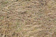 Dry Grass Background Stock Image