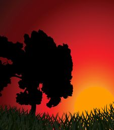 Silhouette Of A Tree Against A Sunset Royalty Free Stock Images