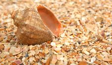 Free Cockleshell On Sea Sand Royalty Free Stock Images - 14155539