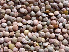 Lentils Legume Texture Stock Images