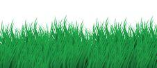 Free Summer Grass Stock Photo - 14156240