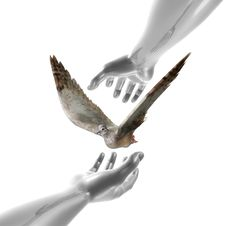 Peaceful Dove And Hands Symbol Royalty Free Stock Photo