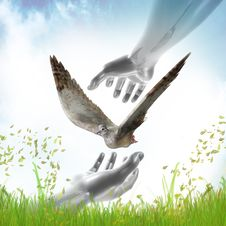 Hands Catching Dove For Peace Symbol Stock Image