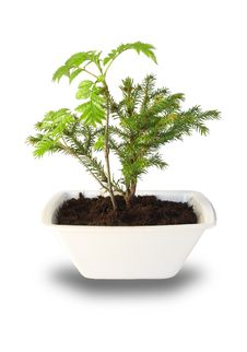 Free Small Tree Stock Image - 14156791