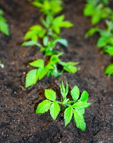 Free New Plant Royalty Free Stock Image - 14156856