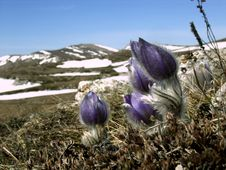 Free Mountain Flowers. Stock Photography - 14156972