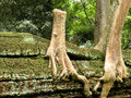 Free Big Tree Stock Photo - 14160200