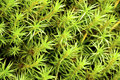 Free Green Moss Background Stock Photography - 14160782
