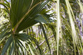 Free Palms Stock Images - 14165764