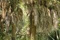Free Palms Stock Image - 14165791