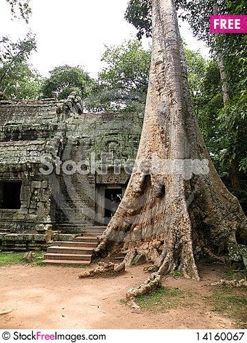 Free Big Tree Royalty Free Stock Photography - 14160067