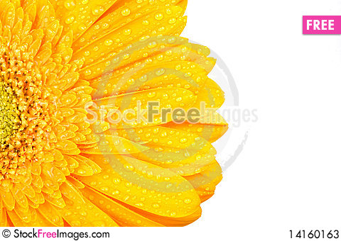 Free Yellow Gerbera With Drops Of Water Stock Photos - 14160163