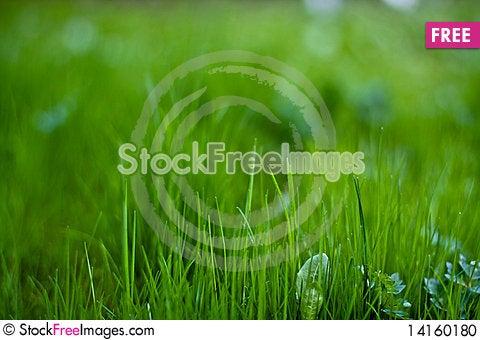 Free Lawn Stock Photo - 14160180