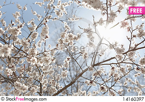 Free Background Of Flowers Royalty Free Stock Photography - 14160397