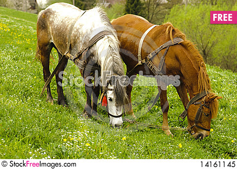 Free Two Horses Are Grazing Royalty Free Stock Photo - 14161145