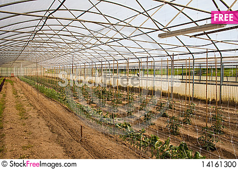 Free Greenhouse Stock Photo - 14161300