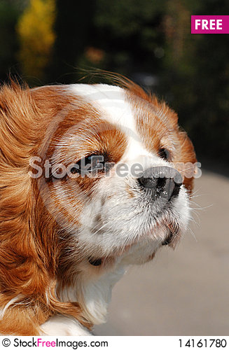Free Window Dog Stock Photo - 14161780