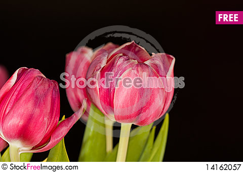 Free Tulip Bouquet Royalty Free Stock Photography - 14162057