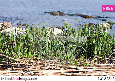 Free Green Grass Stock Photography - 14162312