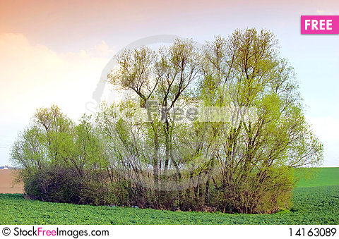 Free Group Of Trees Royalty Free Stock Images - 14163089