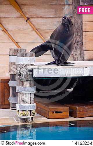 Free Seal Show . Stock Images - 14163254