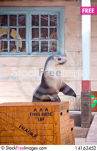 Free Seal Show . Stock Photography - 14163452