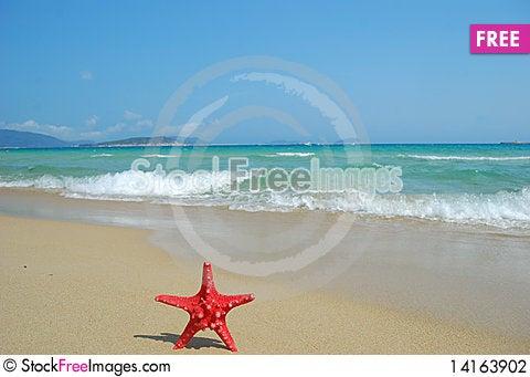 Free Starfish Stock Photography - 14163902