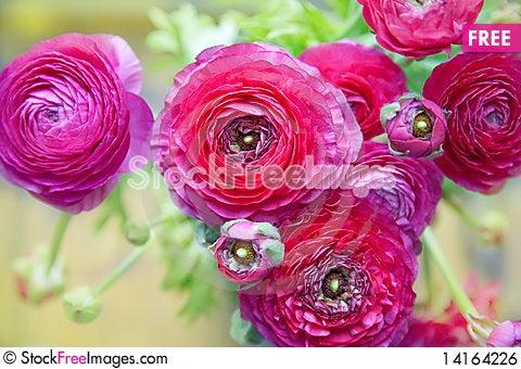 Free Flowers Background Royalty Free Stock Image - 14164226