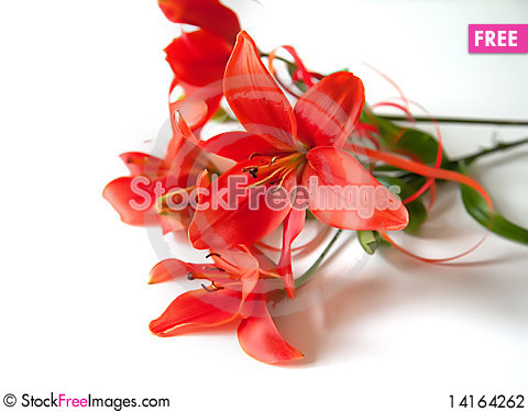 Free Flowers Background Stock Photography - 14164262