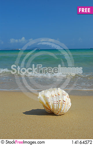 Free Conch Stock Photography - 14164572
