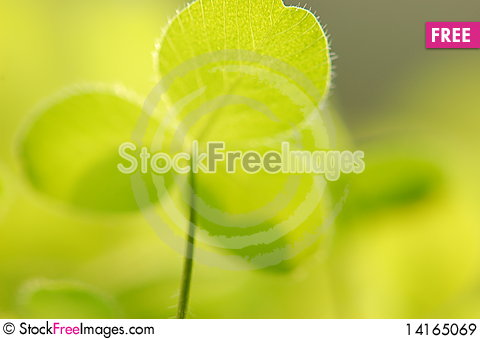 Free Green Lovely Clover Royalty Free Stock Images - 14165069