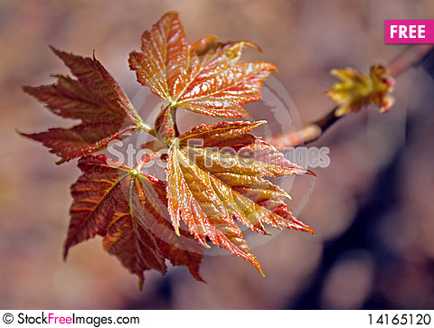 Free New Leaves Stock Photo - 14165120